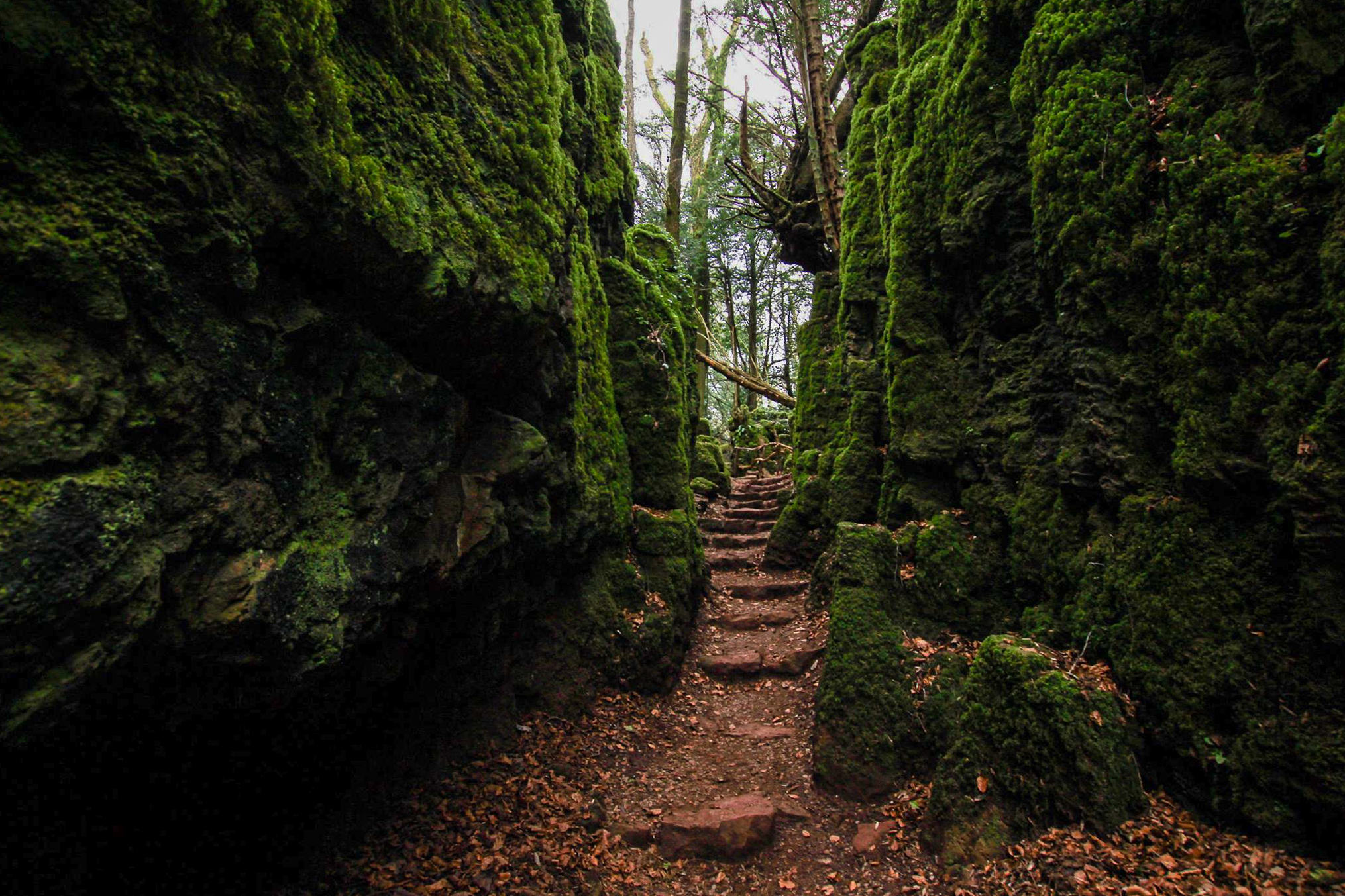 Puzzlewood Forest of Dean Star Wars Doctor Who Filming Location Woodland Green Moss Top 25 Things to Do in Herefordshire