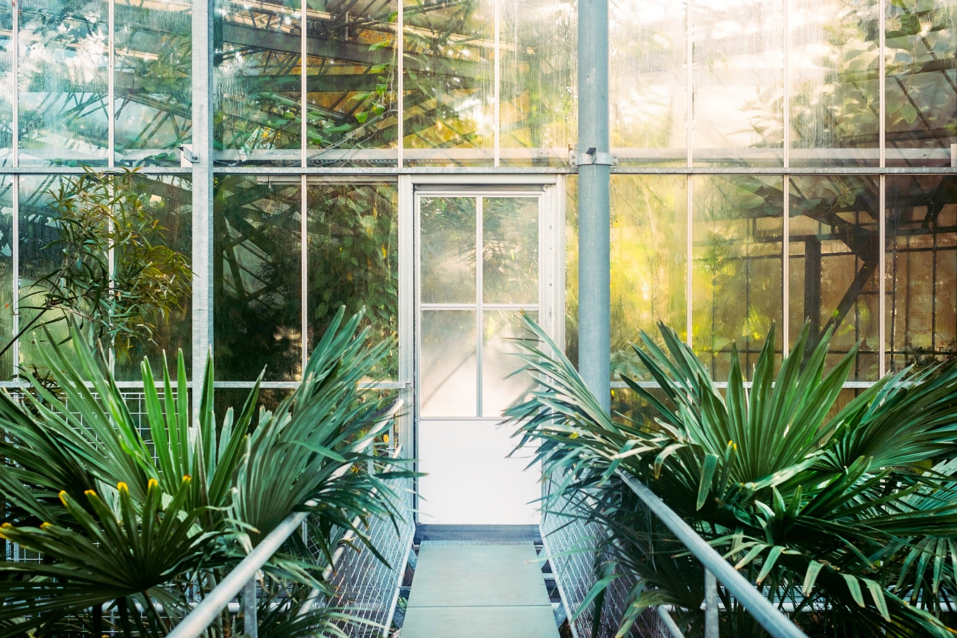 bright-airy-indoor-botanical-garden-green-plants-against-glass-in-greehouse-in-summer