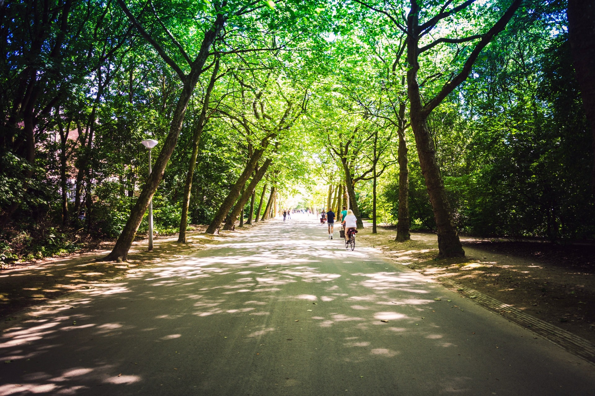 people-running-and-cycling-through-a-green-sun-dabbled-park-in-summer