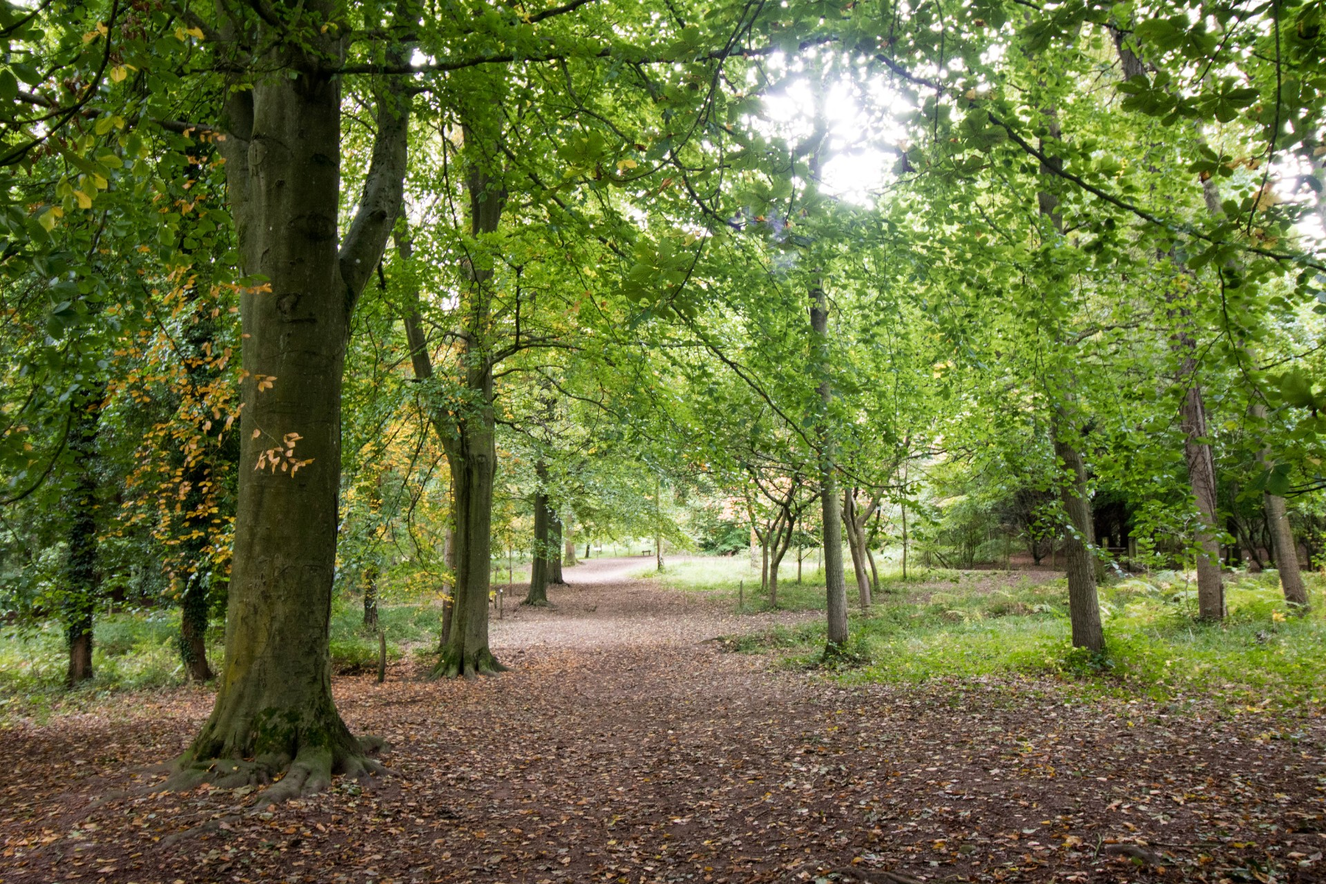 Queenswood Country Park Leominster English Woodland Forest Top 25 Things to Do in Herefordshire