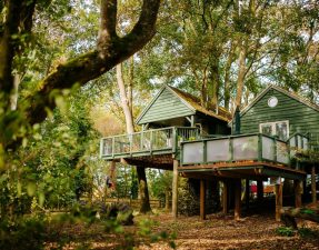 large-green-treehouse-amongst-trees-in-woods-wills-tree-house-upper-tysoe-warwickshire