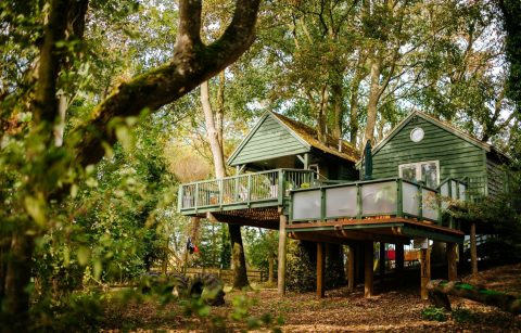 large-green-treehouse-amongst-trees-in-woods-wills-tree-house-upper-tysoe-warwickshire