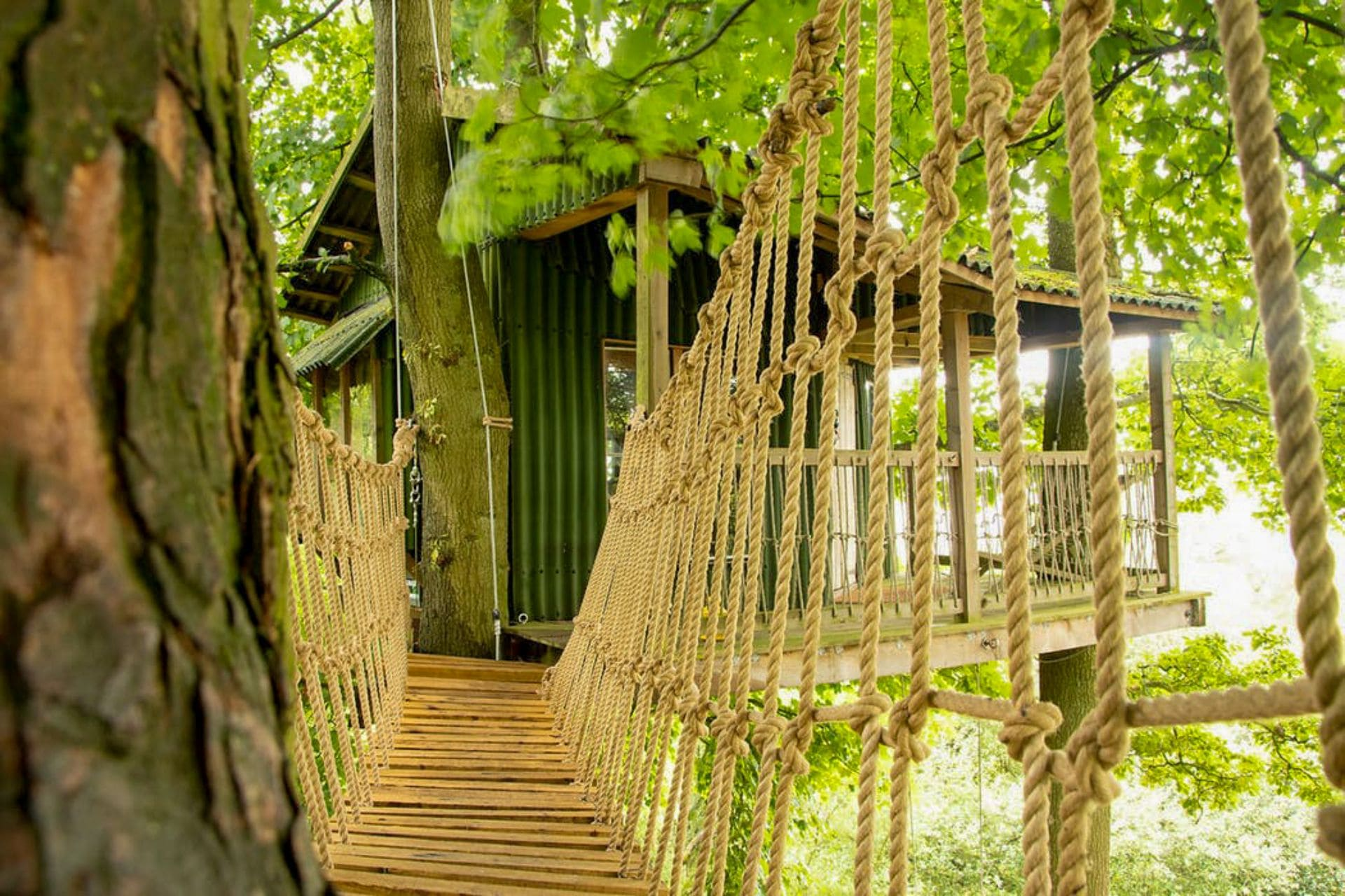 rope-bridge-amongst-trees-in-wood-leading-to-treehouse-copse-camp-denbighshire-wales
