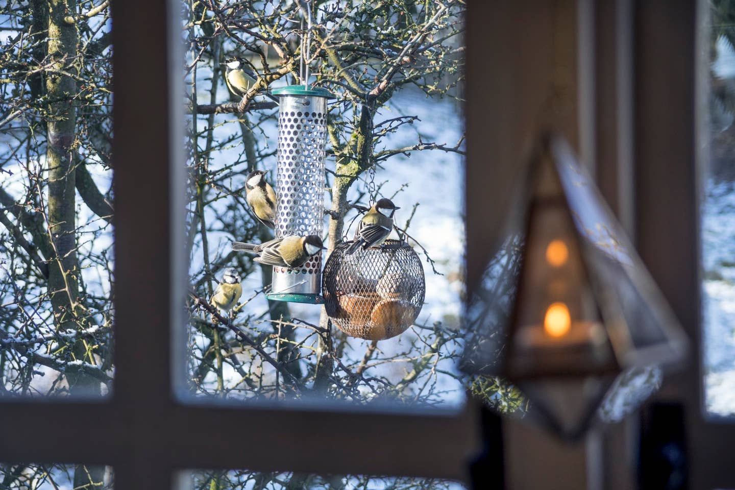 birds-on-birdfeeder-in-a-snowy-winter-scene-looking-through-a-window