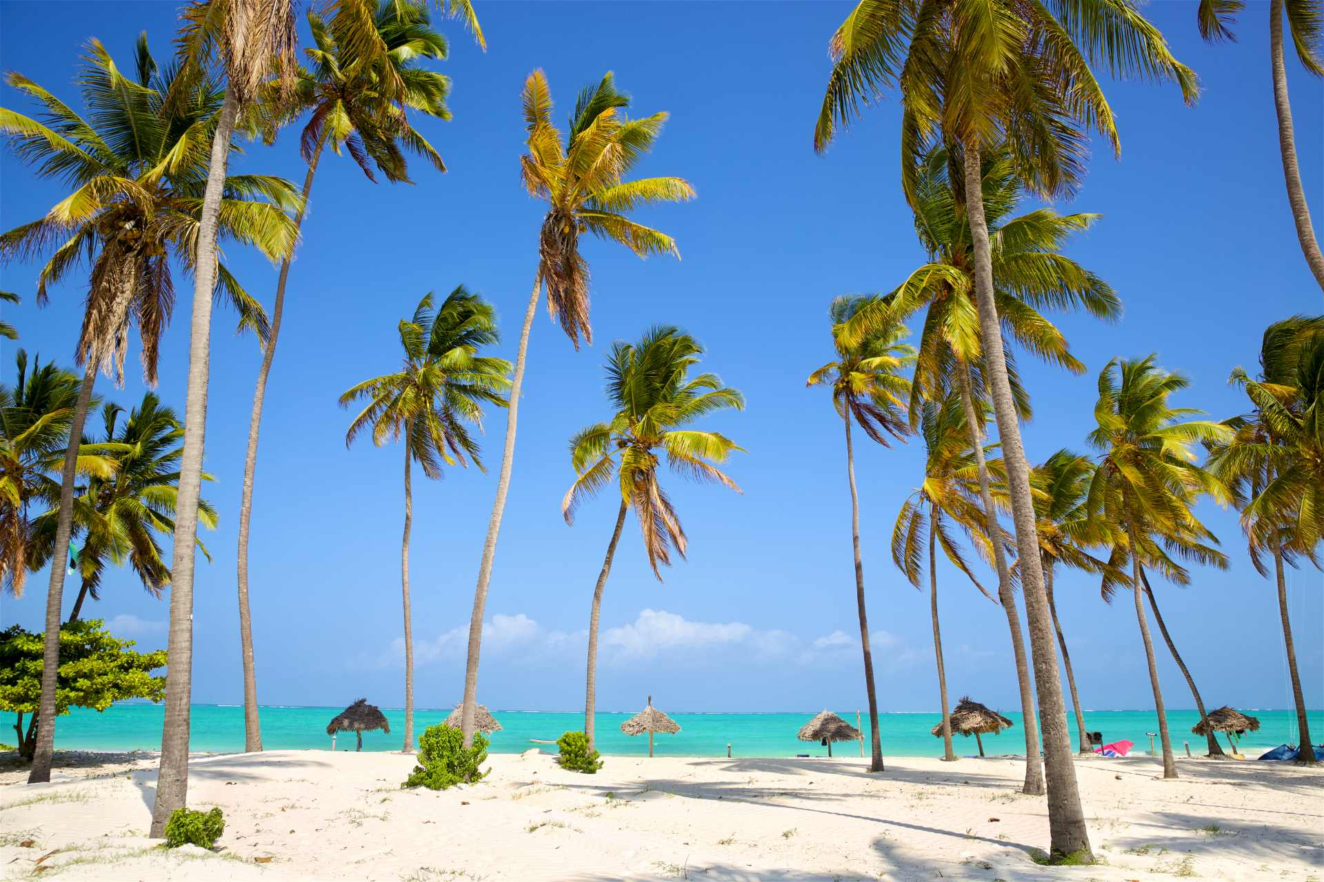 paje-white-sand-beach-with-palm-trees-on-sunny-summers-day-best-things-to-do-in-zanzibar
