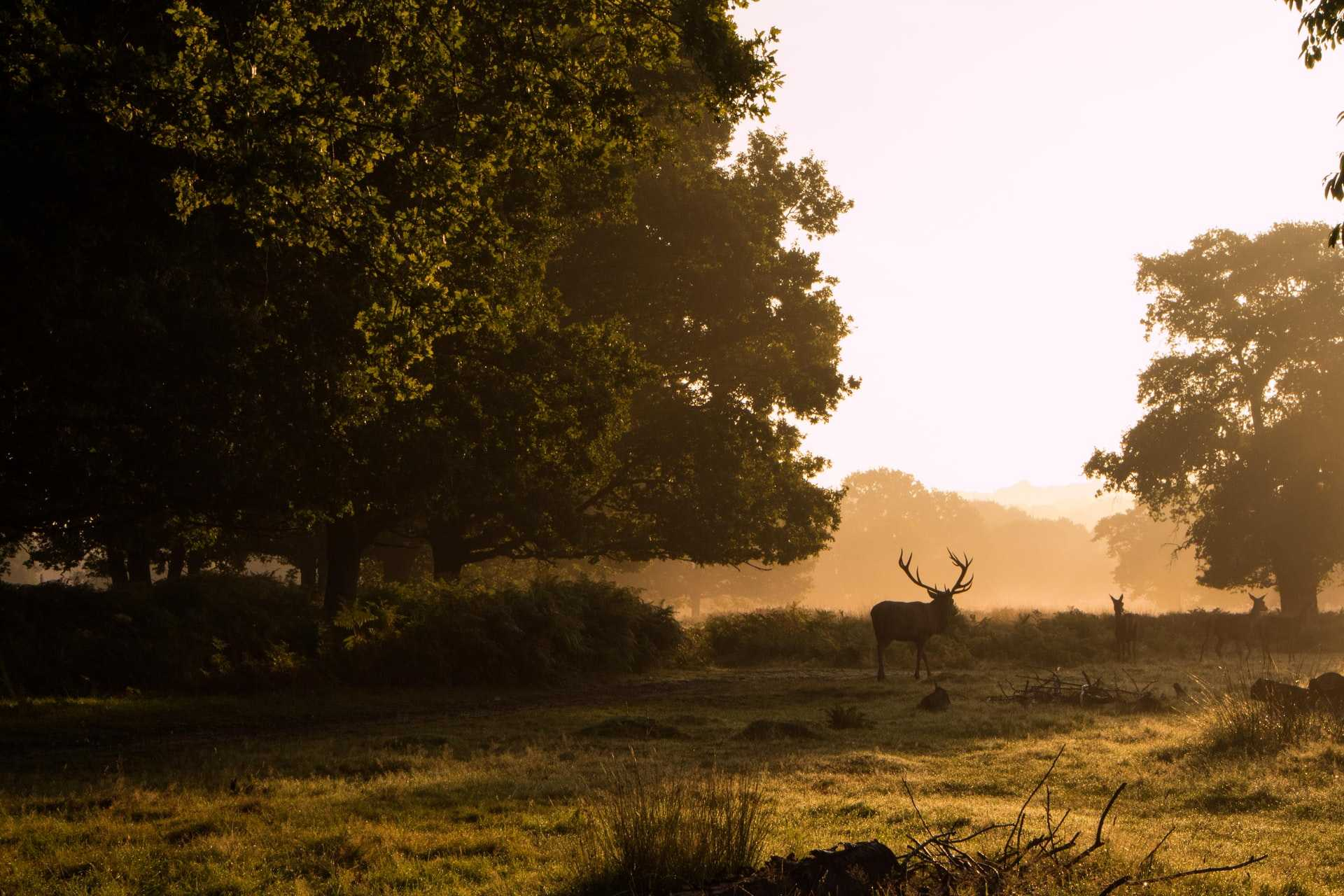 deer-walking-around-park-at-golden-hour-sunset-in-richmond-park-most-beautiful-parks-in-london
