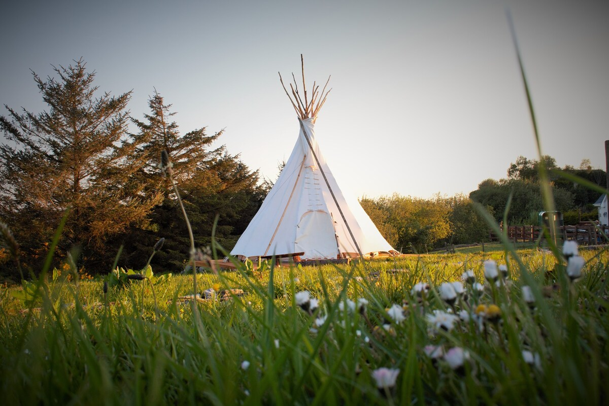 deluxe-native-american-tipi-in-field-at-sunset-in-ballyshannon-glamping-donegal