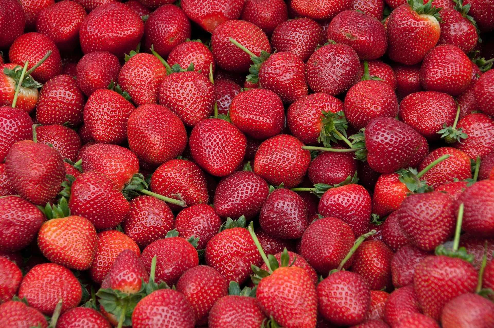 loads-of-strawberries