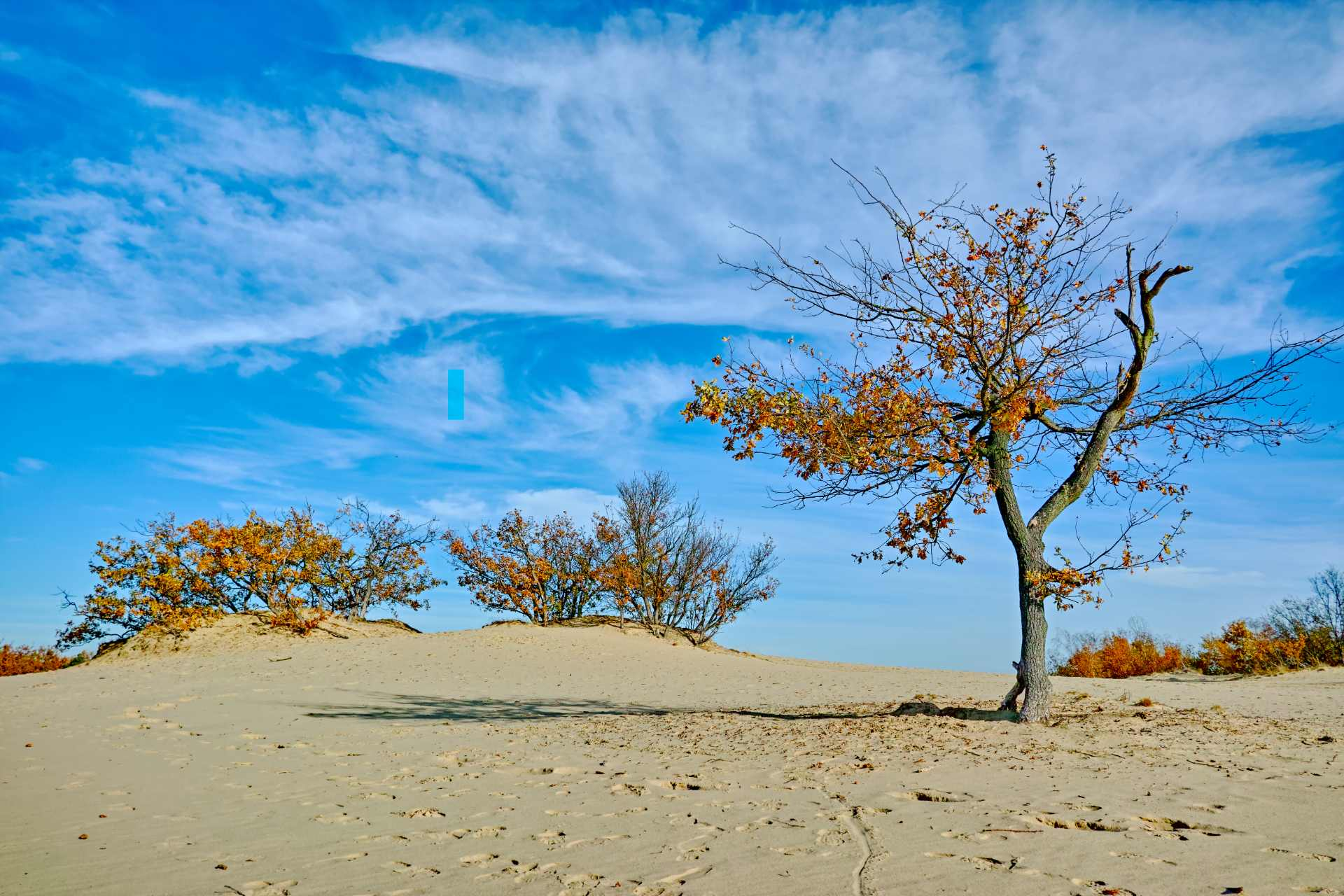lone-tree-standing-in-sandy-desert-in-front-of-blue-skies-brabant-sahara-nature-in-the-netherlands-beautiful-places-in-the-netherlands