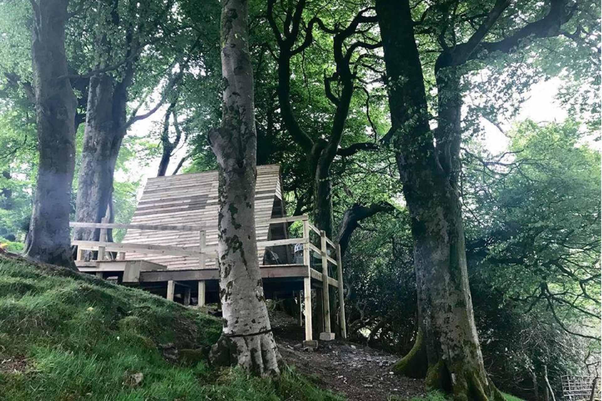 tree-top-pod-at-hafod-hall-amongst-trees-on-slope
