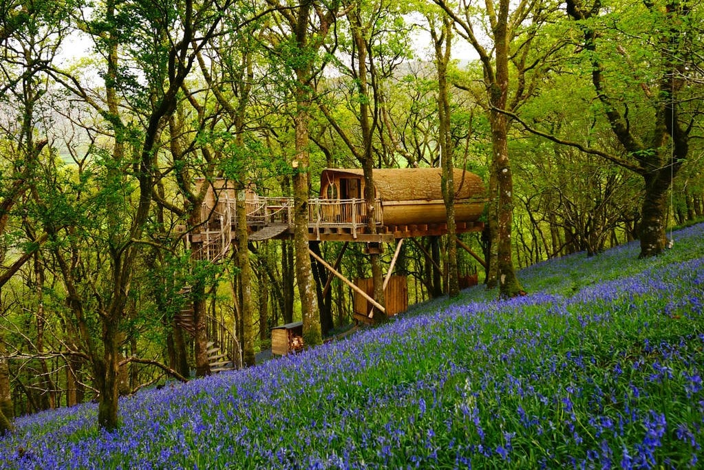 treehouse-with-spiral-staircase-in-bluebell-wood-glamping-snowdonia-glamping-snowdonia
