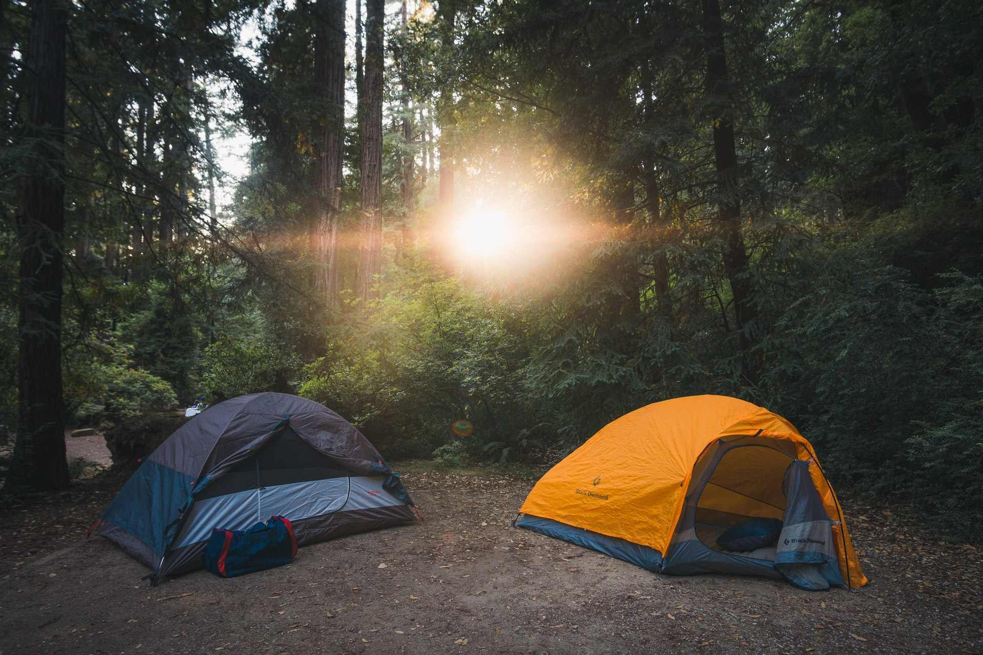 two-tents-in-forest-in-redwoods-california-eco-friendly-camping