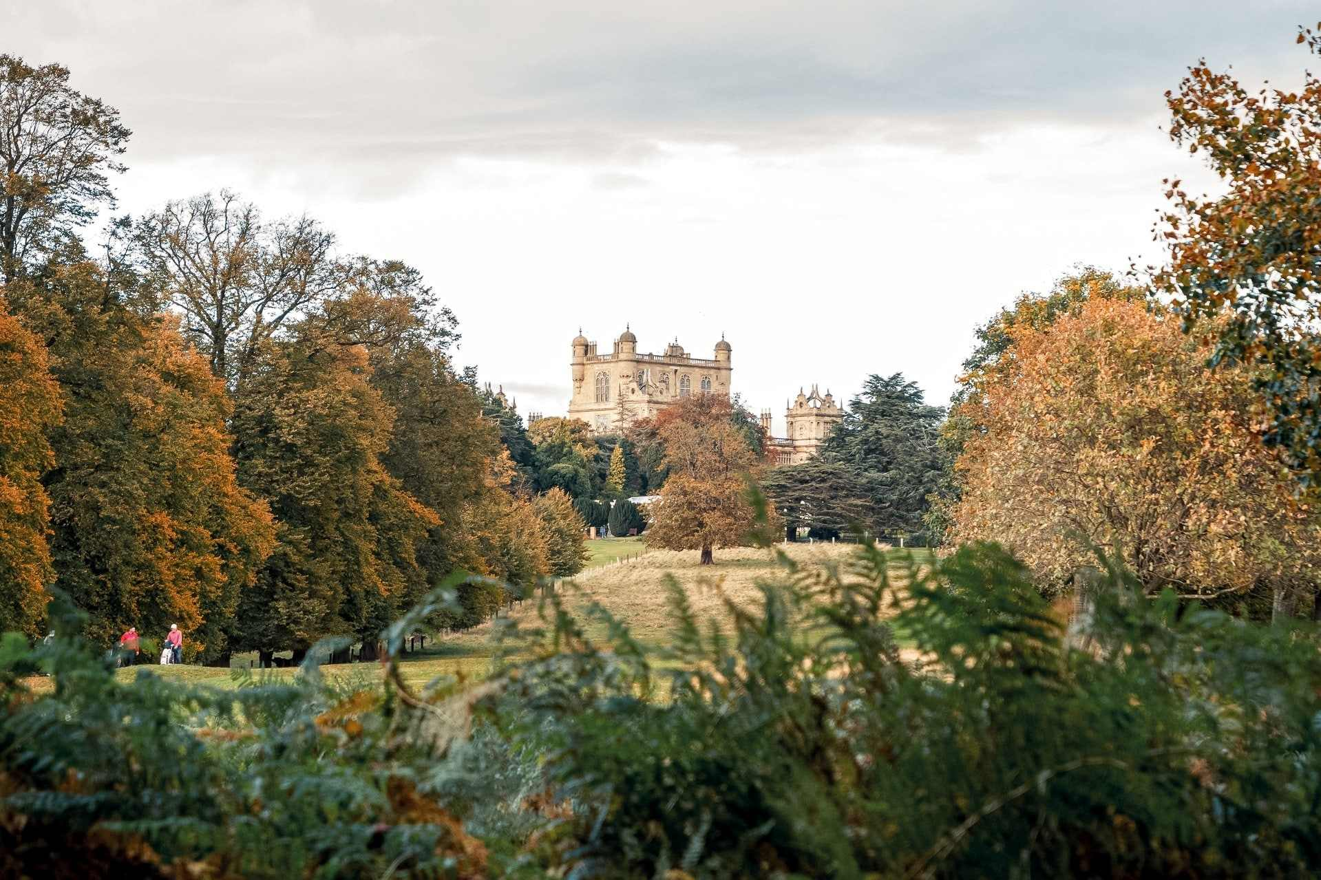 view-of-wollaton-hall-country-house-from-behind-bush-across-park