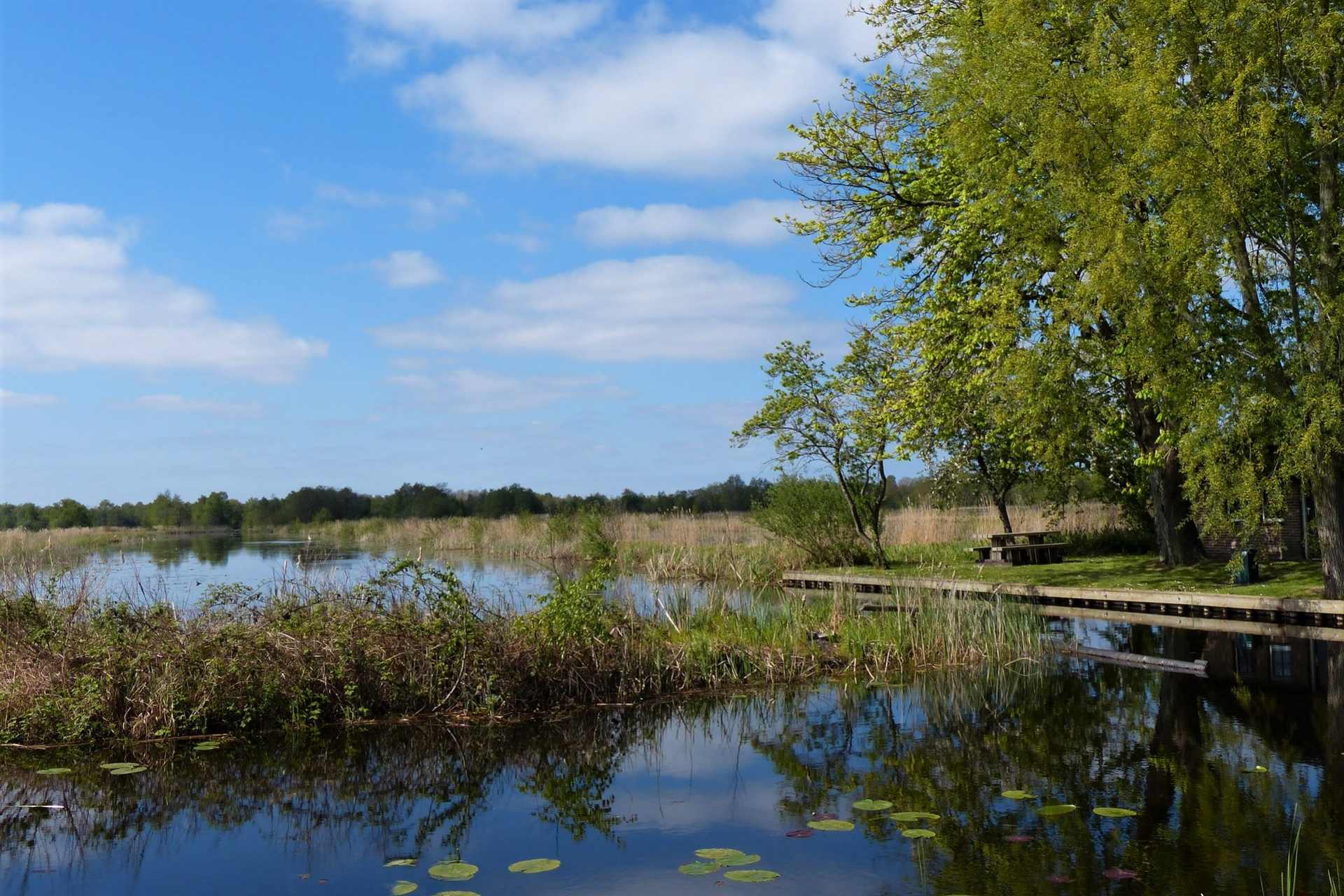 water-with-lily-pads-and-vegetation-coming-out-of-water-weerribben-wieden