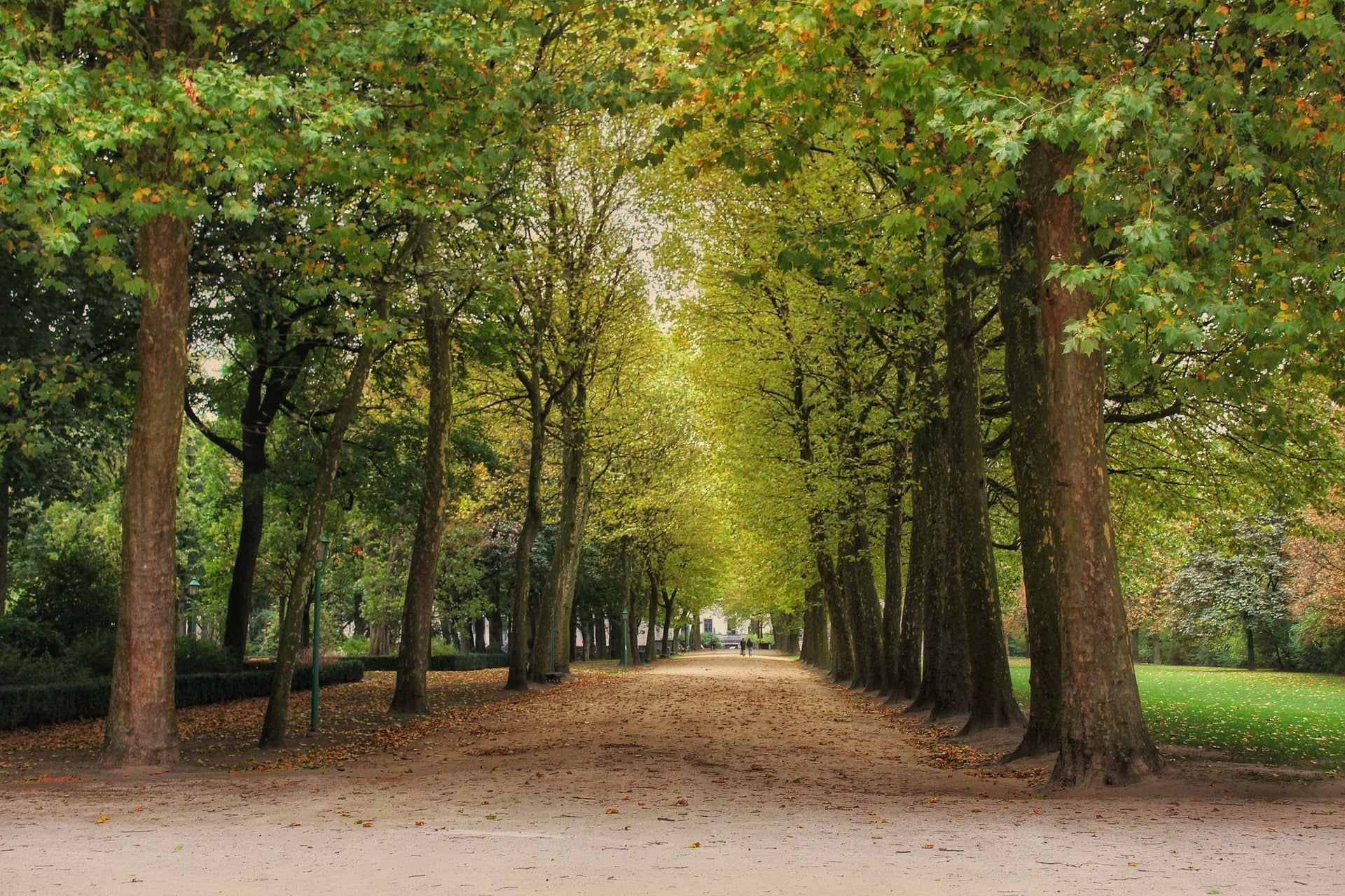 green-trees-lining-path-in-brussels-park-in-spring