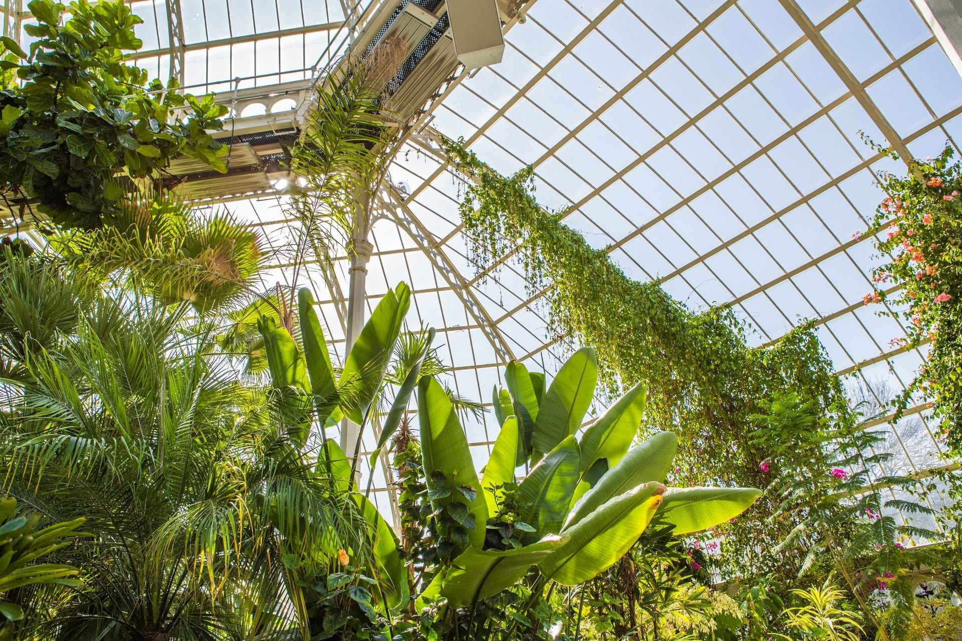 plants-in-large-greenhouse-on-sunny-day-at-sefton-park-palm-house-preservation-trust-date-ideas-liverpool