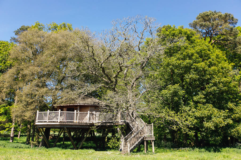 steps-leading-up-to-bagthorpe-treehouse-in-trees-on-green-field